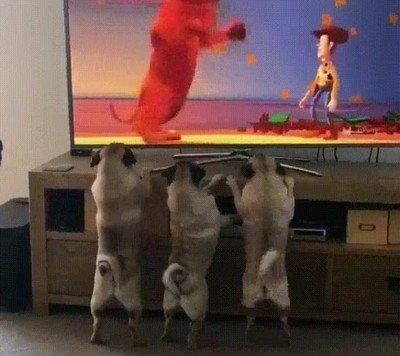 Enlace a Mis perros están obsesionados con esta escena de Toy Story