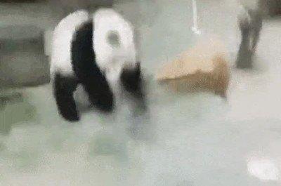 Enlace a Un panda atacando como un ninja
