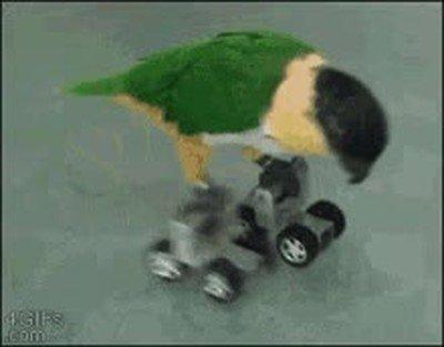 Enlace a Admítelo, este pájaro patina mejor que muchos de nosotros