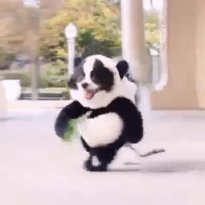 Enlace a Perros que fueron pandas en otra vida