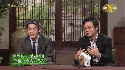 Enlace a Este debate de televisión tiene un gatito para evitar tensiones