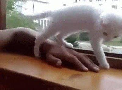 Gato salvando a una mano apunto de caer