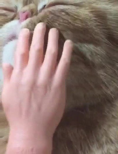 Enlace a Ojalá ser gato y recibir uno de estos masajes por la mañana
