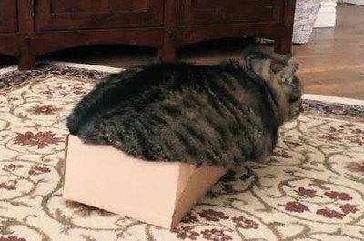 Enlace a Es oficial, creo que tengo que volver a hacer dieta