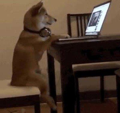 Enlace a Cuando pillas a tu perro viendo vídeos de perras por internet