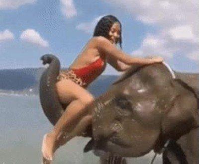 Enlace a Este elefante es todo un caballero