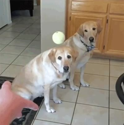 Enlace a Dicen que los perros acaben pareciéndose a sus dueños