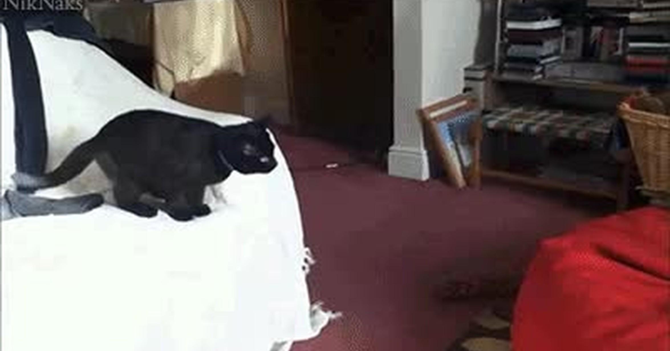 Открытки дню, кот прыгает гифка