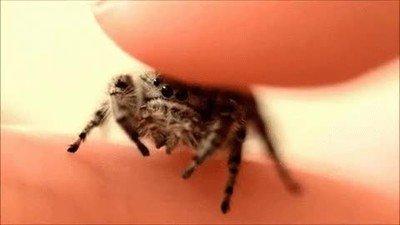 Enlace a Algunas arañas también pueden ser adorables