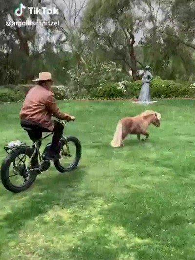 Enlace a Arnold Schwarzenegger persiguiendo a un pony en bicicleta