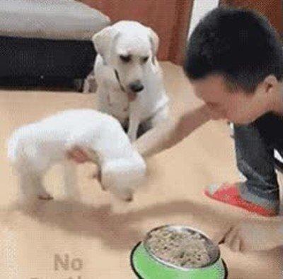 Enlace a En esta vida hay dos tipos de perro