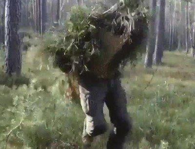 Enlace a No volverás a pasear tranquilo por el bosque