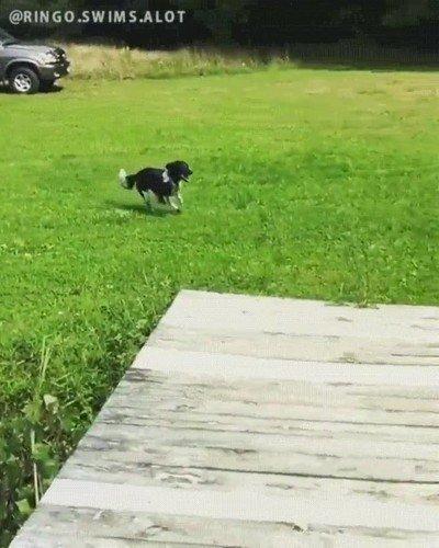 Enlace a El espectacular salto de un perro al agua