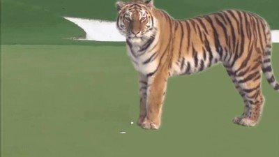 Enlace a Así me imaginaba a Tiger Woods la primera vez que escuché su nombre