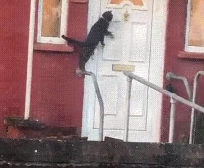 Gatos educados que llaman a la puerta antes de entrar en casa