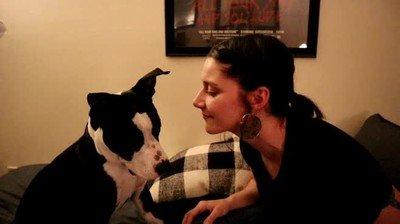 Enlace a Perros que no soportan los besos de sus amos