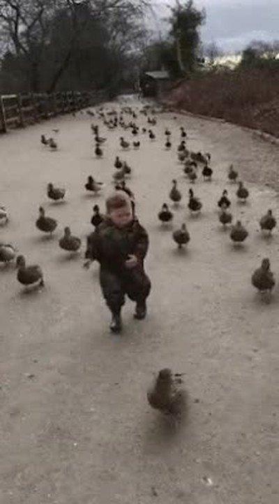 Enlace a La rebelión de los patos ha empezado