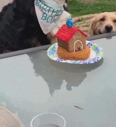 Enlace a El cumpleaños de este perro coincide con el mejor día de su vida