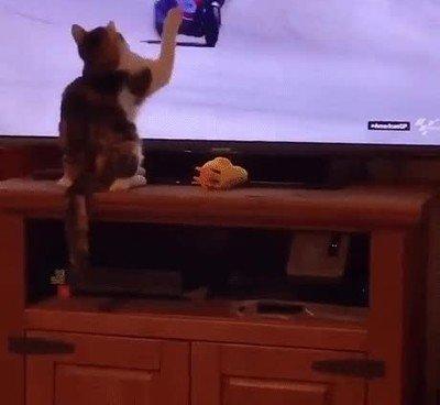 La culpa ha sido del gato, evidentementr