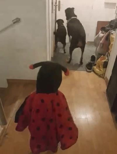 Enlace a La adorable reacción de una familia cuando papá llega a casa después de trabajar
