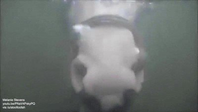 Enlace a ¿Alguna vea habías visto a un caballo haciendo burbujas de agua?
