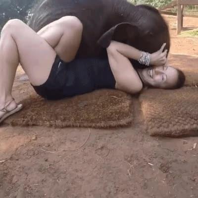 Enlace a No hay nada más cariñoso que un bebé elefante por la mañana