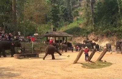 Enlace a ¿Habías visto a elefantes jugando a fútbol?