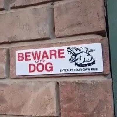 Enlace a Cuidado con el perro, mola mucho más que tu