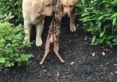 Corre, ven a ver a este cachorro extraño
