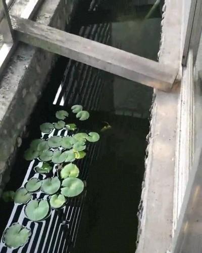 Enlace a Hay gente que tiene un acuario en el balcón de casa
