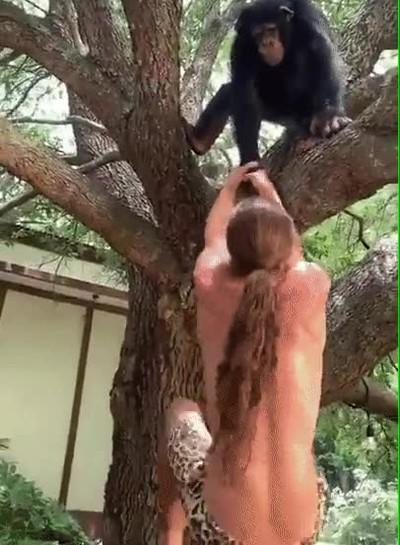 No lo parece pero los chimpancés tienen una fuerza en los brazos tremenda