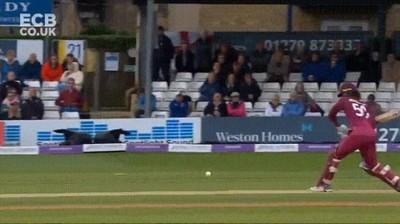 Enlace a Una de las mejores atrapadas que he visto en un partido de cricket