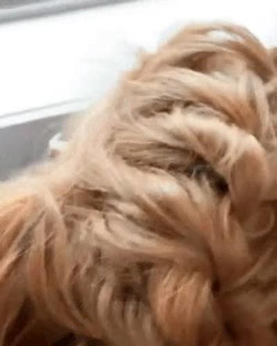 Enlace a Este perro tiene un pelazo mejor que el tuyo. Asúmelo