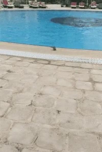Enlace a Hasta los pájaros lo pasan mal en estos días de calor