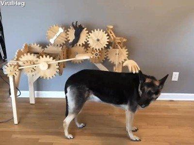 Máquina para dar mimos a tu perro mientras estás fuera de casa trabajando