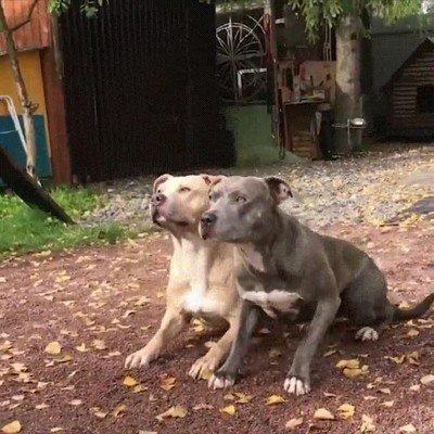 Estos dos perros están perfectamente sincronizados