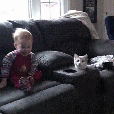 Enlace a Cuando abres una lata de atún y tu gato anda cerca
