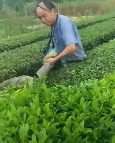 Enlace a Es una pasada la forma en la que se cortan las plantas de los jardines