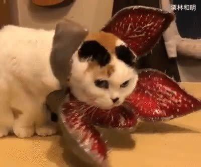 Enlace a Este gato se ha currado un cosplay de demogorgon