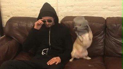 Enlace a Dicen que los perros se parecen a sus humanos