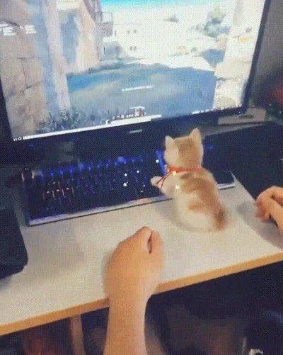 Enlace a Gatos que te solucionan una mala partida
