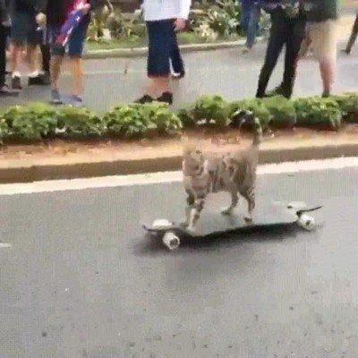 Enlace a Gatos que patinan mejor que yo