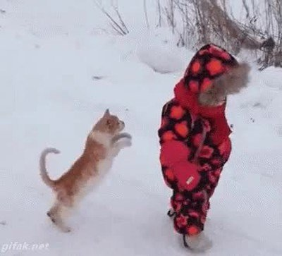 Enlace a Gatos que han aprendido a hacer aikido