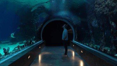 Enlace a ¿Podrías relajarte en este túnel lleno de tiburones?
