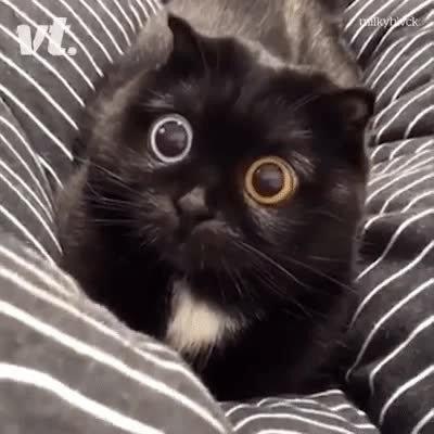 Enlace a Los ojos más adorables que he visto nunca en un gatito