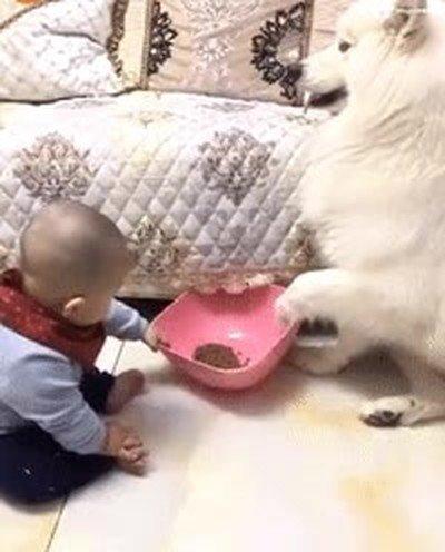 Enlace a Este perro no se dejará robar la comida tan fácil