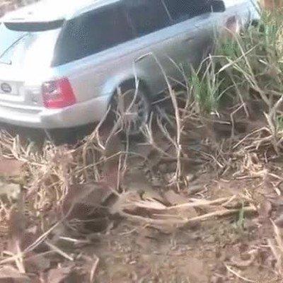 Enlace a Un gigante ayudando a rescatar un coche encallado