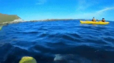 Enlace a Una foca abofeteando a un señor con un pulpo