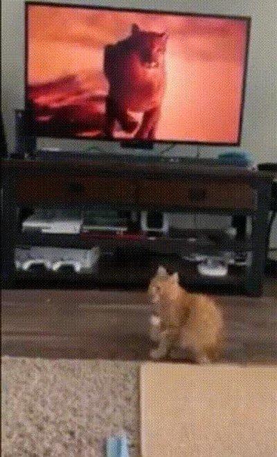 Enlace a La prueba de que los animales entienden lo que sale en la televisión