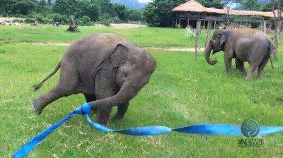 Enlace a Un elefante que solo necesita una cinta para ser feliz